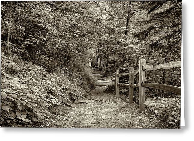 Appalachian Trail At Newfound Gap - Sepia Greeting Card by Stephen Stookey