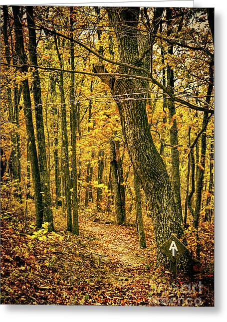 Greeting Card featuring the photograph Appalachian Trail In The Blue Ridge In Autumn by Dan Carmichael