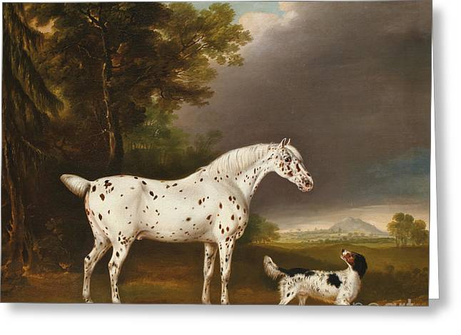 Appaloosa Horse And Spaniel Greeting Card by Thomas Weaver