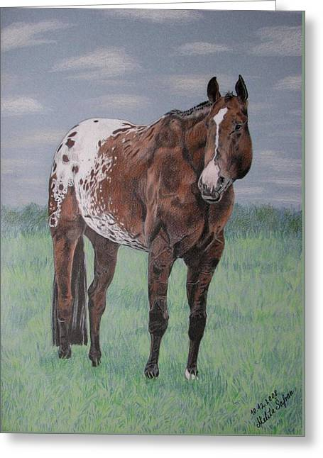 Appaloosa Greeting Card by Melita Safran