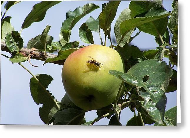 Apple Bee Greeting Card