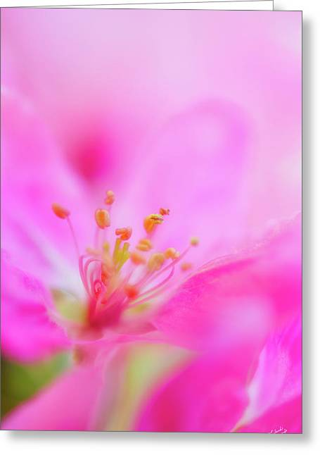 Apple Blossom 1 Greeting Card by Leland D Howard