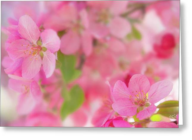 Apple Blossom 4 Greeting Card by Leland D Howard