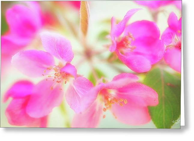Apple Blossom 6 Greeting Card by Leland D Howard