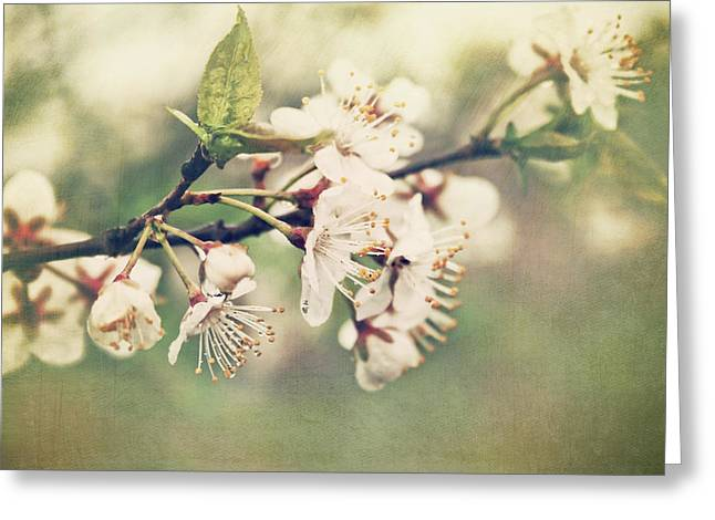 Apple Photographs Greeting Cards - Apple blossom branch in early spring Greeting Card by Sandra Cunningham