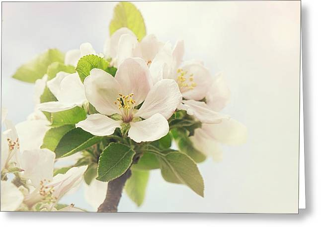 Apple Blossom Retro Style Processing Greeting Card by Jane Rix