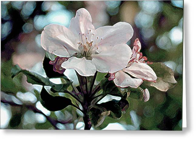 Apple Blossom Time Greeting Card by RC deWinter