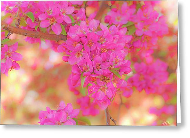 Apple Blossoms A Greeting Card by Leland D Howard