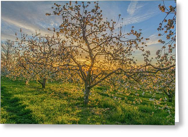 Apple Blossoms At Sunrise 2 Greeting Card
