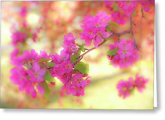 Apple Blossoms B Greeting Card
