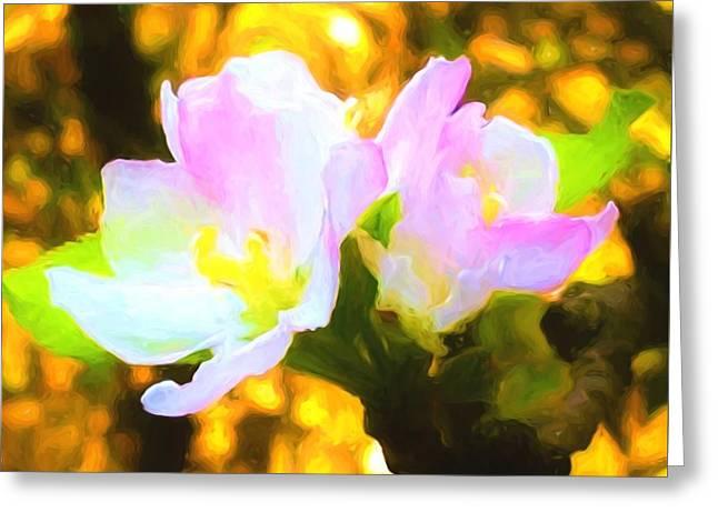 Apple Blossoms Greeting Card by Debra Lynch