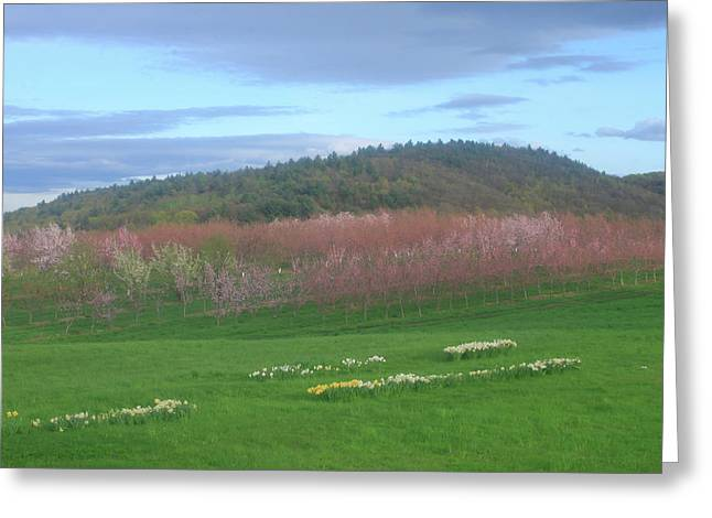 Apple Blossoms In Spring Greeting Card by John Burk