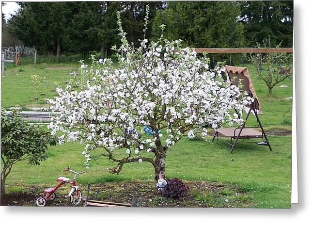 Apple Blossoms Greeting Card by Laurie Kidd