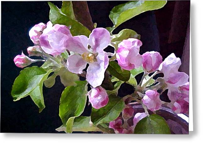 Apple Blossoms  Greeting Card by Valerie  Moore