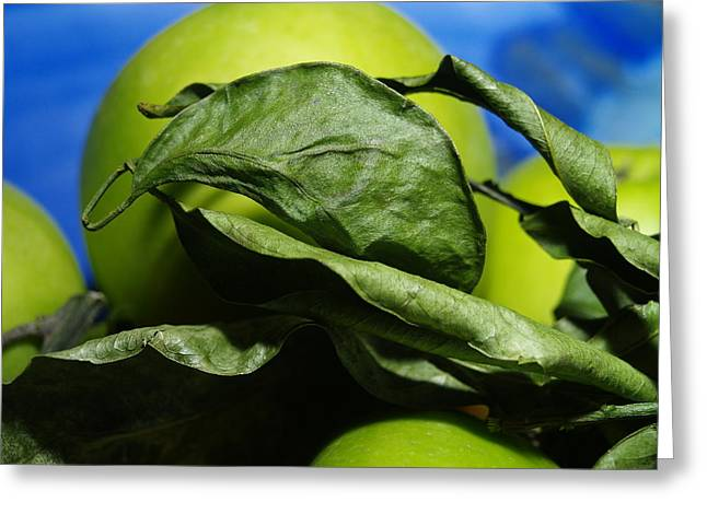 Greeting Card featuring the photograph Apple Leaves by Michael Canning