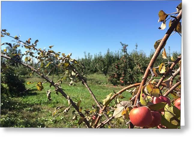Apple Orchard 1 Greeting Card by Jason Nicholas