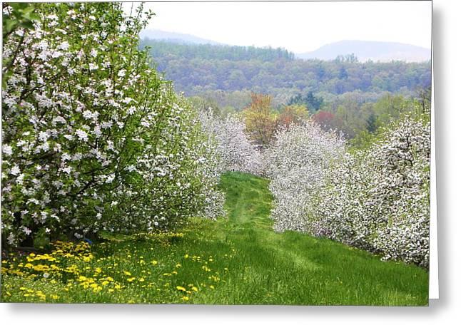 Apple Orchard Greeting Card by Cindy Gacha