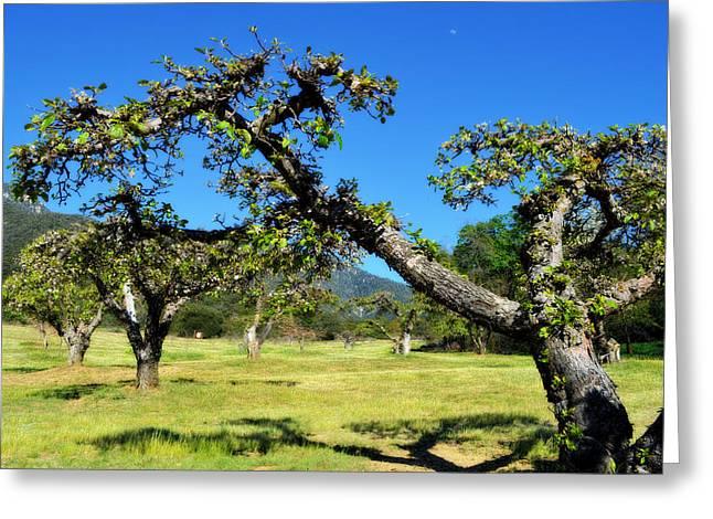 Apple Orchards Of Oak Glen Greeting Card