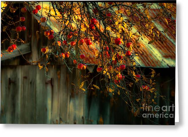 Apple Picking Time Greeting Card by Sherman Perry