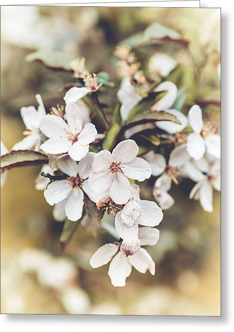 Greeting Card featuring the photograph Apple Spice by Christi Kraft