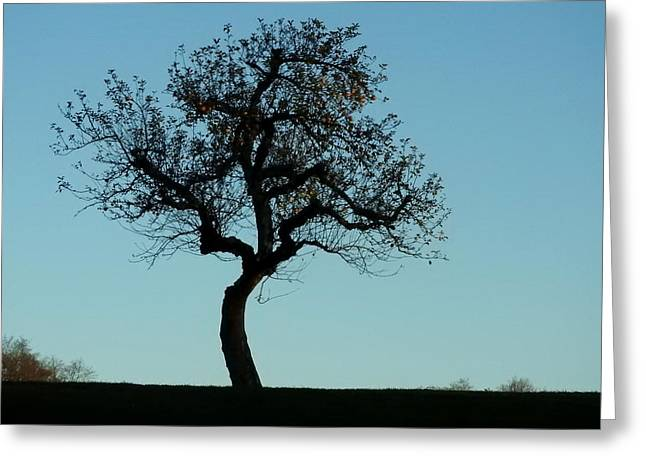 Apple Tree In November Greeting Card