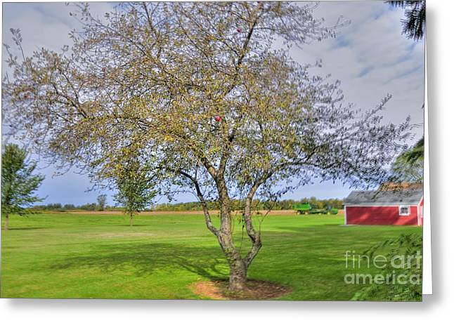 Apple Tree Greeting Card by Kathleen Struckle