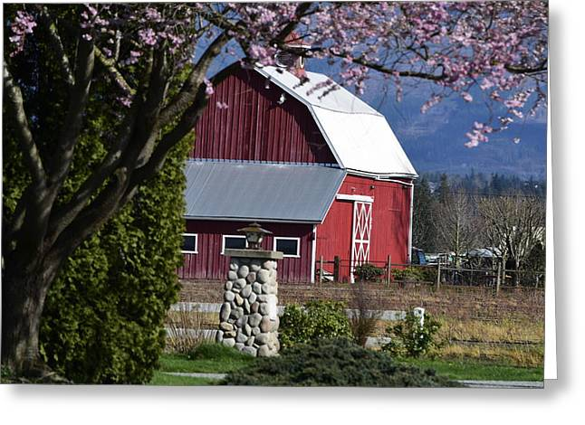 Apple Tree Pink And Barn Red Greeting Card