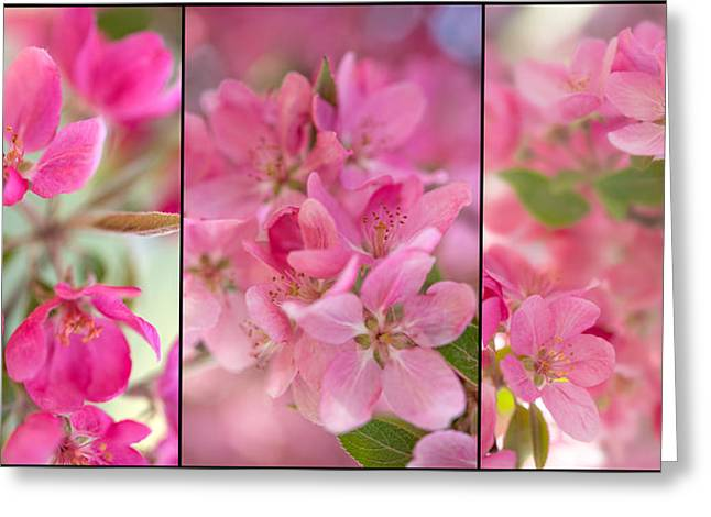 Apple Tree Triptych 2 Greeting Card by Leland D Howard