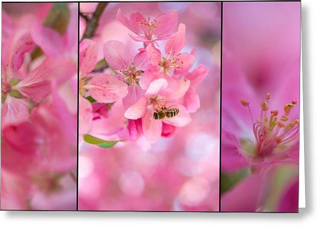 Apple Tree Triptych 3 Greeting Card by Leland D Howard
