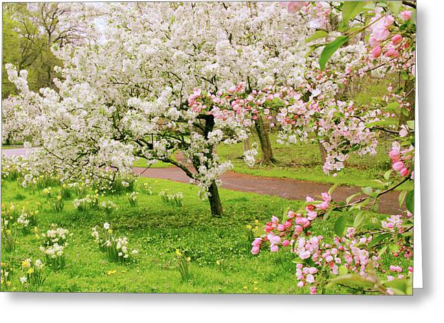 Apple Trees In Bloom Greeting Card by Jessica Jenney