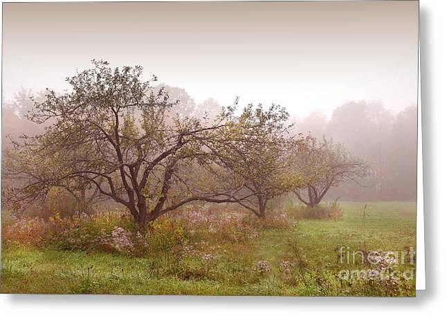 Apples Trees In The Mist Greeting Card by Sandra Cunningham