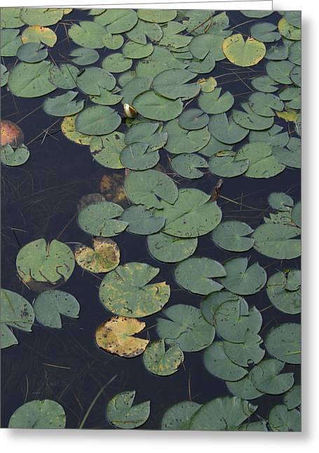 Approaching Lilly Greeting Card by Alan Rutherford