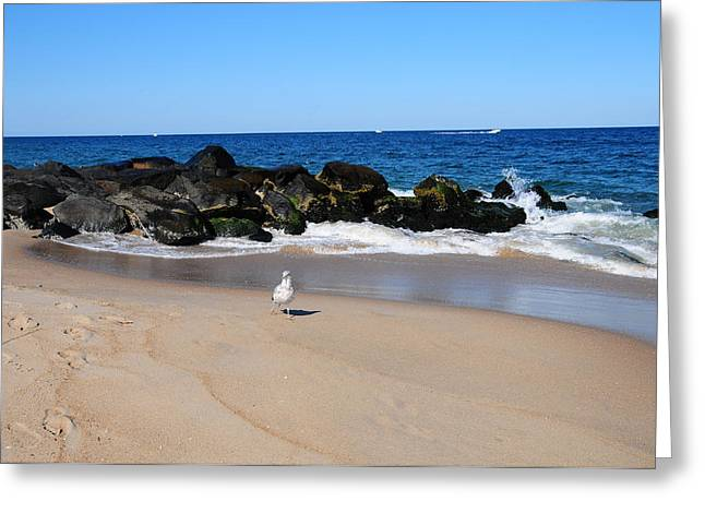 Approaching Seagull Greeting Card by JoAnn Lense