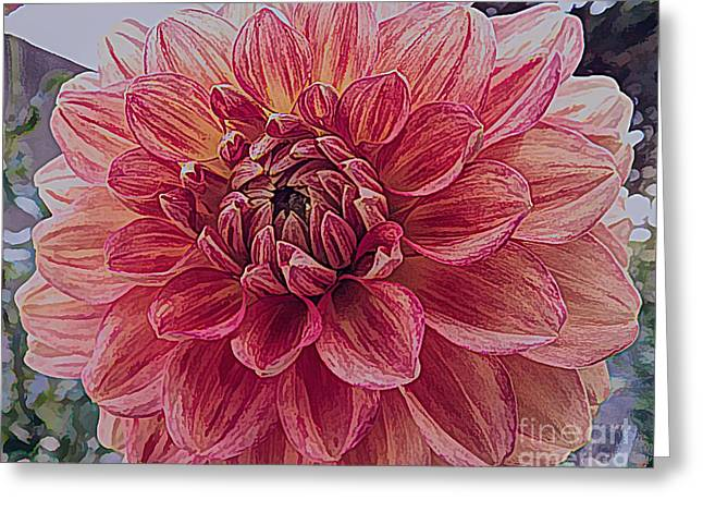 Apricot Dahlia Flower With Drawing Effect Greeting Card