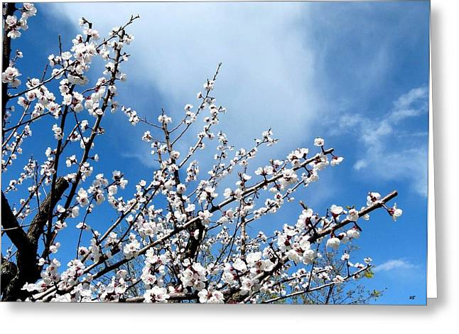 Apricot Tree In Bloom Greeting Card