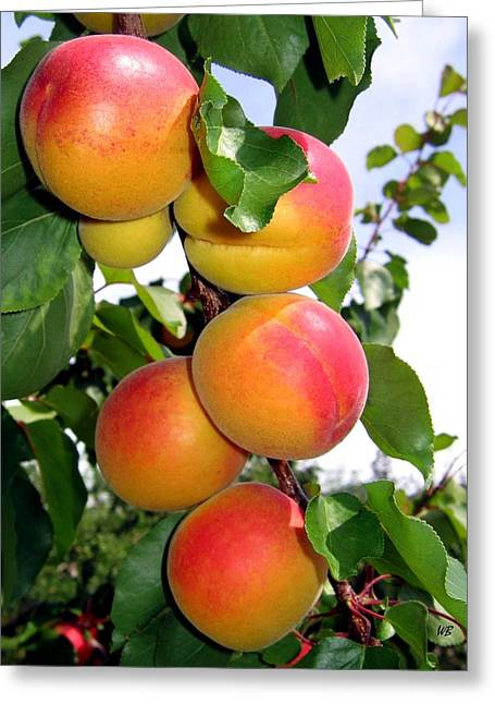 Apricots Greeting Card by Will Borden