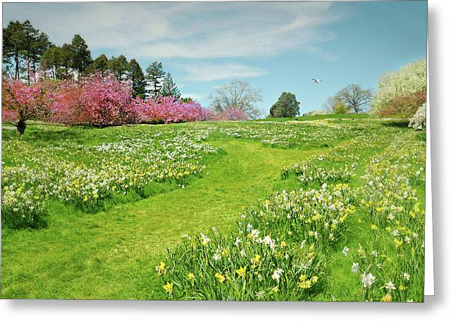 Greeting Card featuring the photograph April Days by Diana Angstadt