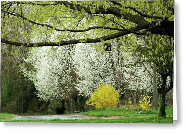 April In Virginia Greeting Card by Joyce Kimble Smith