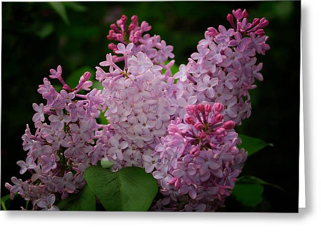 April Lilacs Greeting Card by Tikvah's Hope