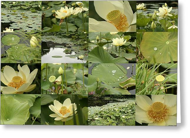 April Lotus Pond Greeting Card
