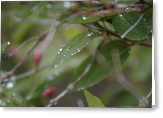Greeting Card featuring the photograph April Showers 1 by Antonio Romero