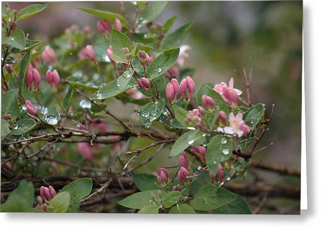 Greeting Card featuring the photograph April Showers 6 by Antonio Romero