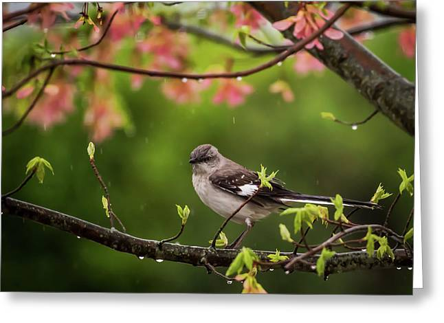 April Showers Bring May Flowers Mocking Bird Greeting Card