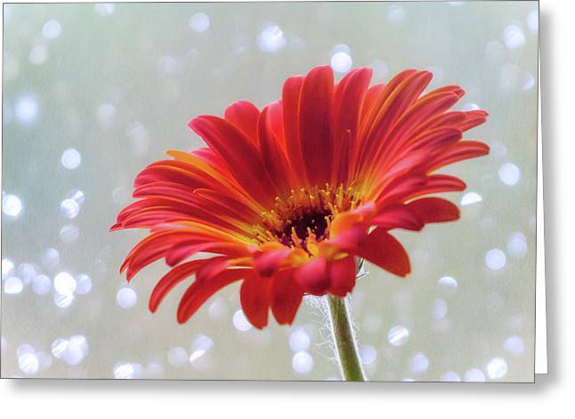 Greeting Card featuring the photograph April Showers Gerbera Daisy Square by Terry DeLuco