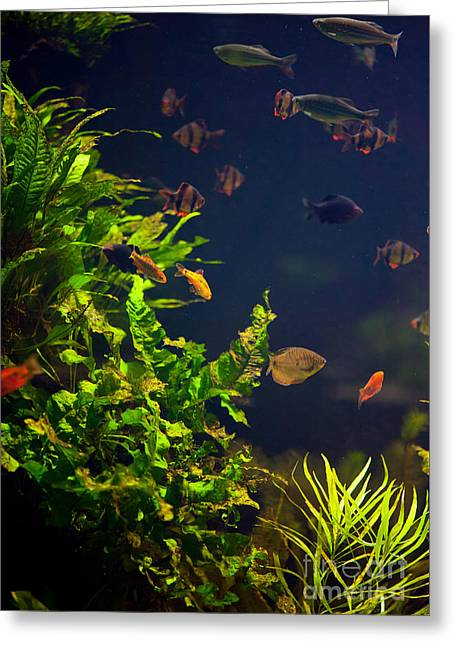 Aquarium Fish And Plants In Zoo Greeting Card by Arletta Cwalina