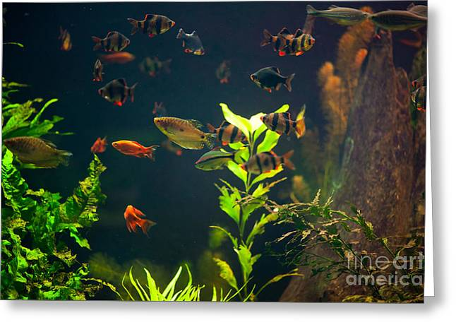 Aquarium Fish Group In Zoo Greeting Card by Arletta Cwalina
