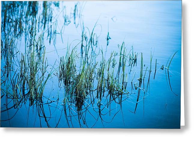 Aquatic Plant Greeting Card