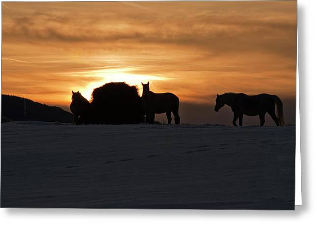 Greeting Card featuring the photograph Arab Horses At Sunset by Daniel Hebard