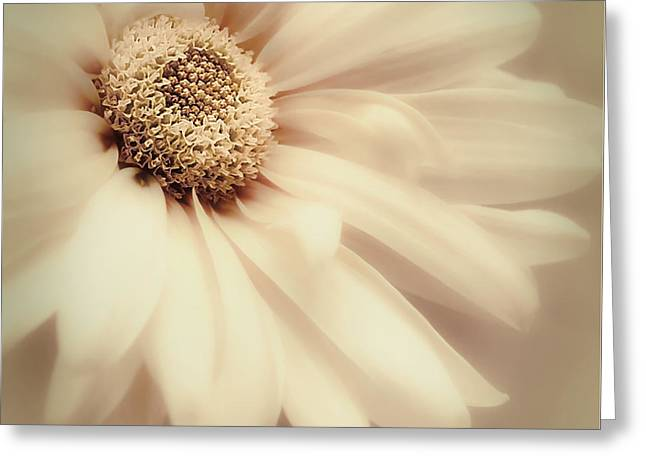 Greeting Card featuring the photograph Arabesque In Butternut by Darlene Kwiatkowski