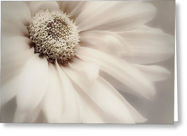 Greeting Card featuring the photograph Arabesque In Champagne by Darlene Kwiatkowski